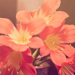 krásné květiny, uklidňující