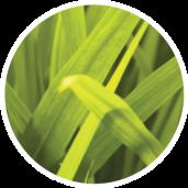 Přírodní doplňky stravy MitoLife