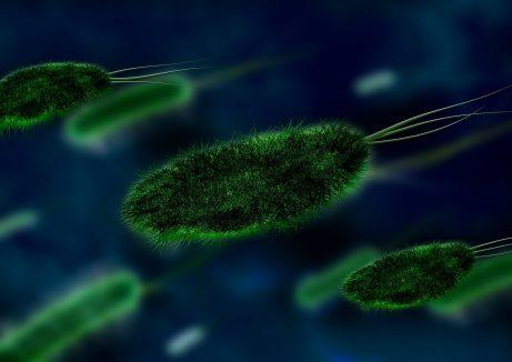 Bakterie Candida kvasinky