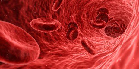 Buňky lidského těla – krvinky
