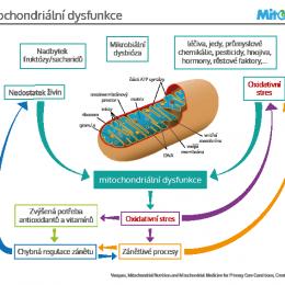 Schéma mitochondriální dysfunkce – zdraví našich buněk