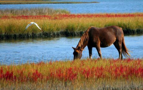 motivace k hubnutí - jízda na koni